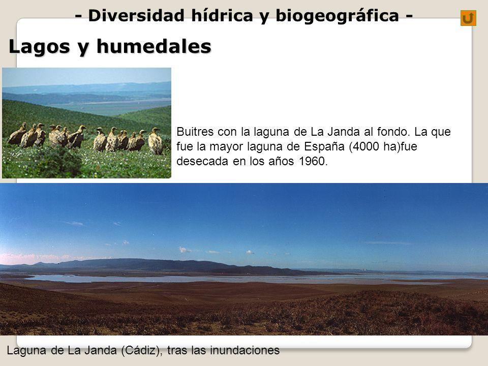 - Diversidad hídrica y biogeográfica - Lagos y humedales Laguna de La Janda (Cádiz), tras las inundaciones Buitres con la laguna de La Janda al fondo.