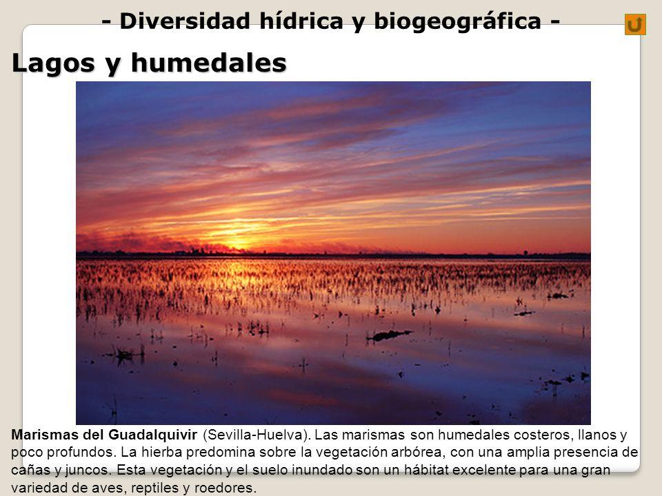 - Diversidad hídrica y biogeográfica - Lagos y humedales Marismas del Guadalquivir (Sevilla-Huelva). Las marismas son humedales costeros, llanos y poc