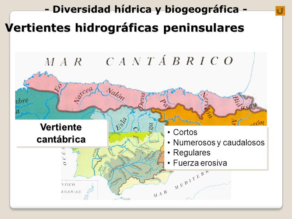 - Diversidad hídrica y biogeográfica - Vertientes hidrográficas peninsulares Cortos Numerosos y caudalosos Regulares Fuerza erosiva Cortos Numerosos y