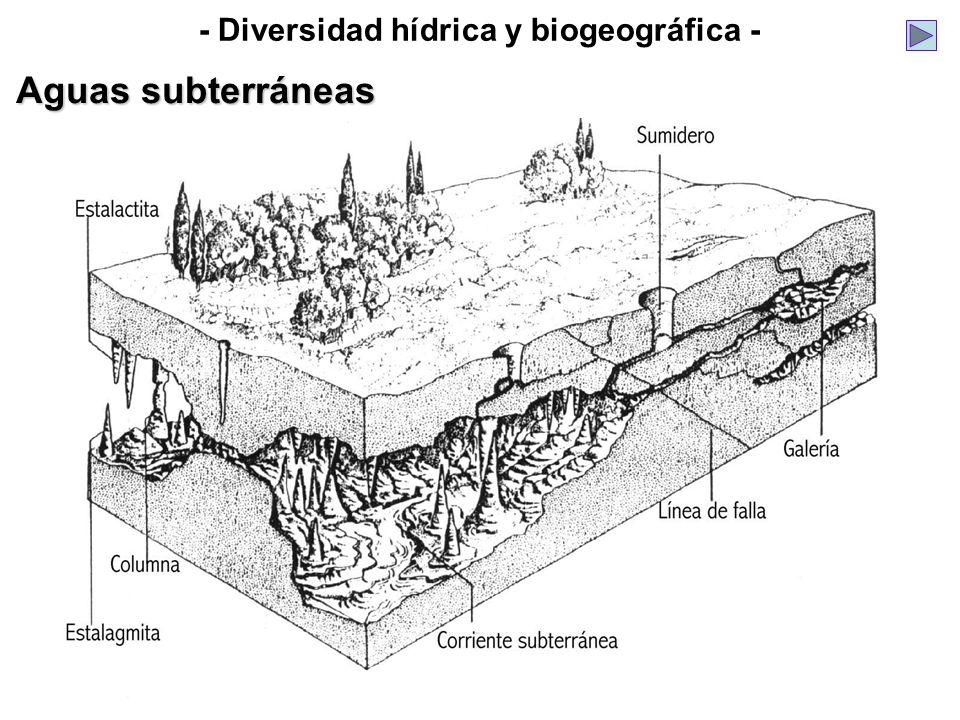 - Diversidad hídrica y biogeográfica - Aguas subterráneas
