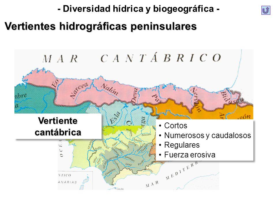 Vertientes hidrográficas peninsulares Cortos Numerosos y caudalosos Regulares Fuerza erosiva Cortos Numerosos y caudalosos Regulares Fuerza erosiva Ve
