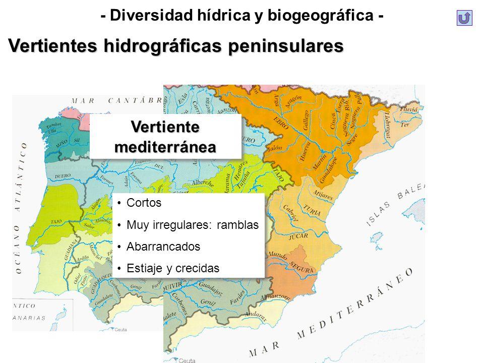 - Diversidad hídrica y biogeográfica -VertientemediterráneaVertientemediterránea Cortos Muy irregulares: ramblas Abarrancados Estiaje y crecidas Corto