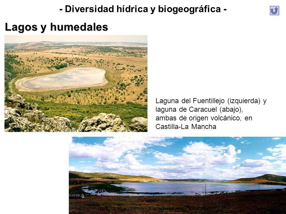 - Diversidad hídrica y biogeográfica - Lagos y humedales Laguna del Fuentillejo (izquierda) y laguna de Caracuel (abajo), ambas de origen volcánico, e