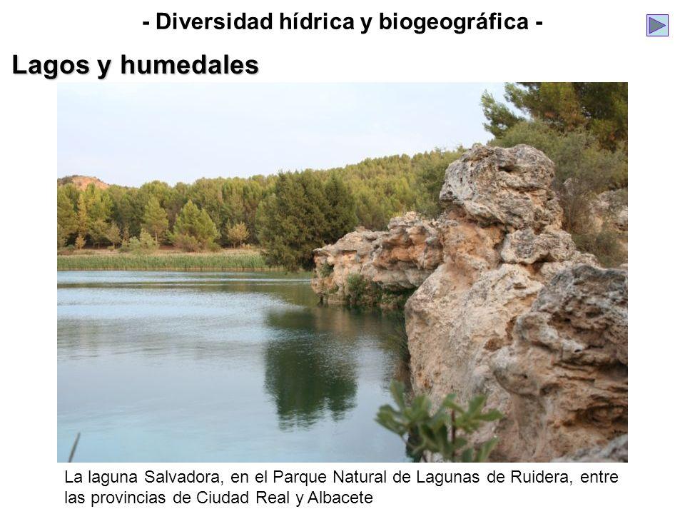 - Diversidad hídrica y biogeográfica - Lagos y humedales La laguna Salvadora, en el Parque Natural de Lagunas de Ruidera, entre las provincias de Ciud