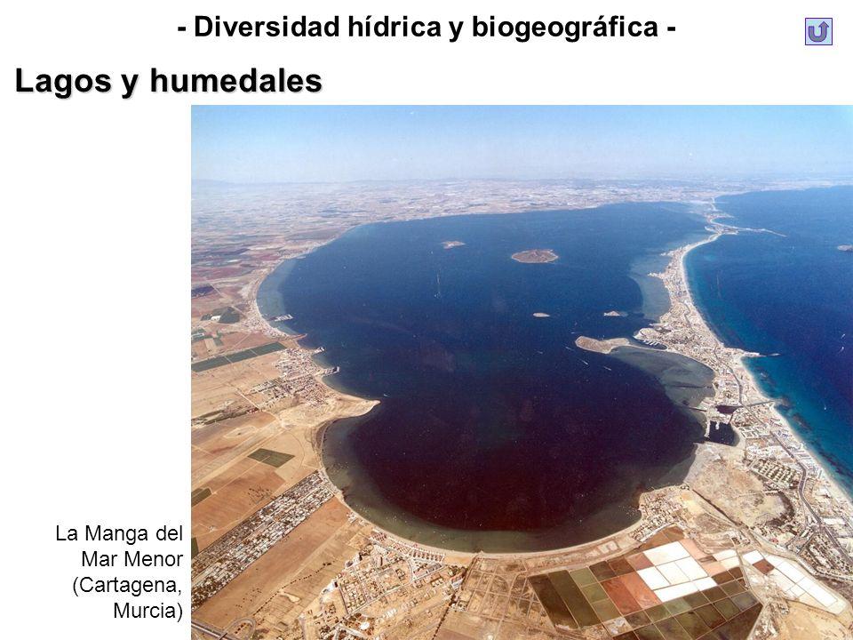 - Diversidad hídrica y biogeográfica - Lagos y humedales La Manga del Mar Menor (Cartagena, Murcia)