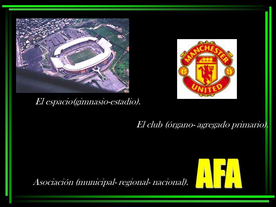 El espacio(gimnasio-estadio). El club (órgano- agregado primario). Asociación (municipal- regional- nacional).