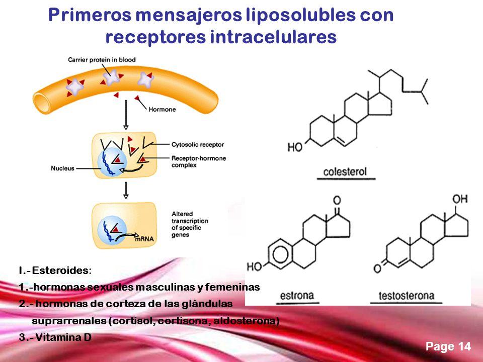 Free Powerpoint Templates Page 14 I.- Esteroides: 1.-hormonas sexuales masculinas y femeninas 2.- hormonas de corteza de las glándulas suprarrenales (