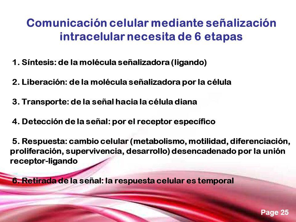 Free Powerpoint Templates Page 25 Comunicación celular mediante señalización intracelular necesita de 6 etapas 1. Síntesis: de la molécula señalizador