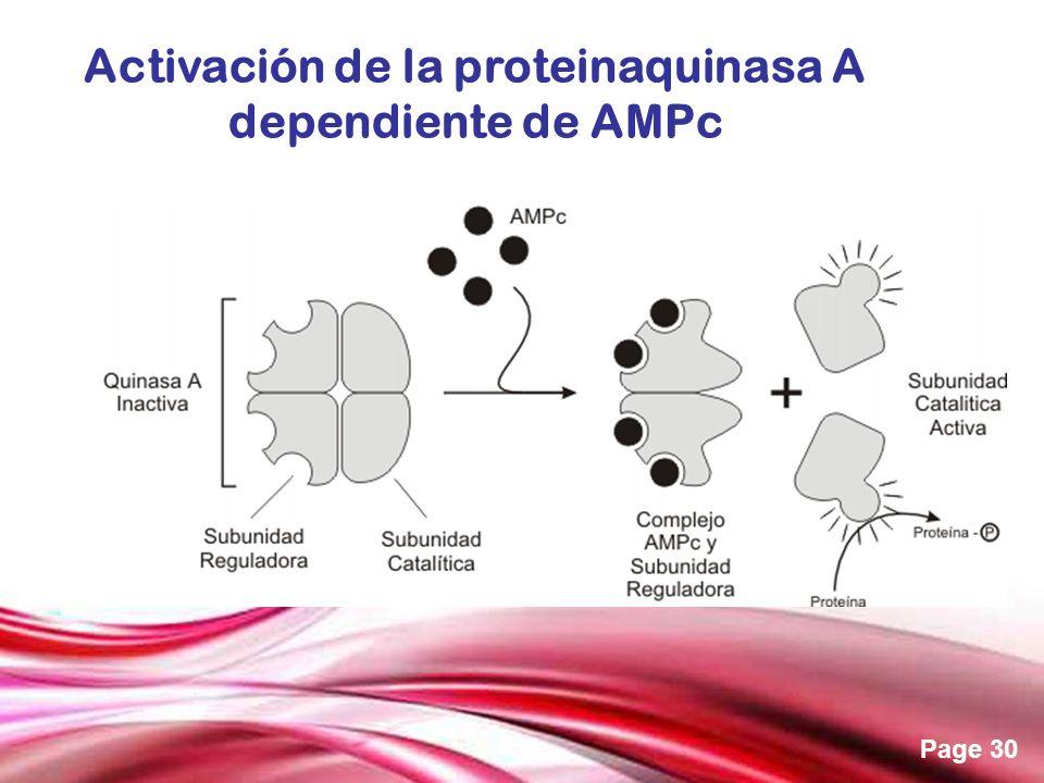 Free Powerpoint Templates Page 30 Activación de la proteinaquinasa A dependiente de AMPc