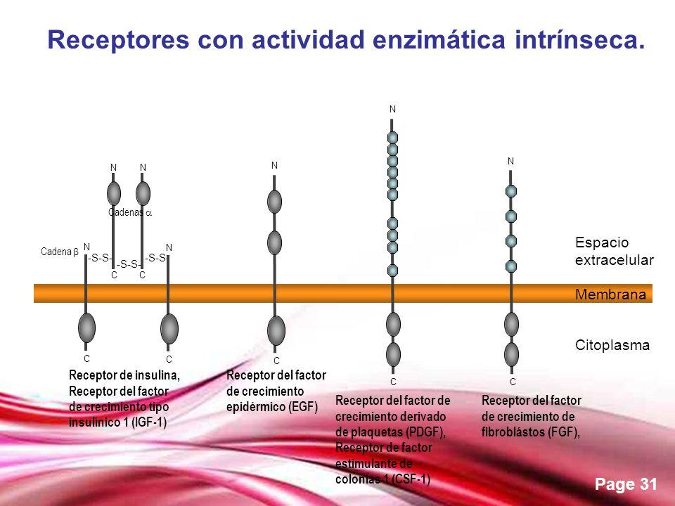 Free Powerpoint Templates Page 31 Receptores con actividad enzimática intrínseca. Receptor del factor de crecimiento de fibroblástos (FGF), C -S-S- C