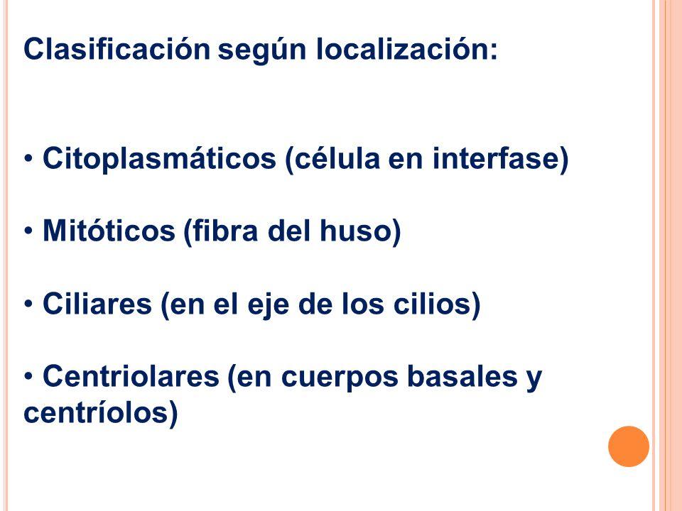 Clasificación según localización: Citoplasmáticos (célula en interfase) Mitóticos (fibra del huso) Ciliares (en el eje de los cilios) Centriolares (en