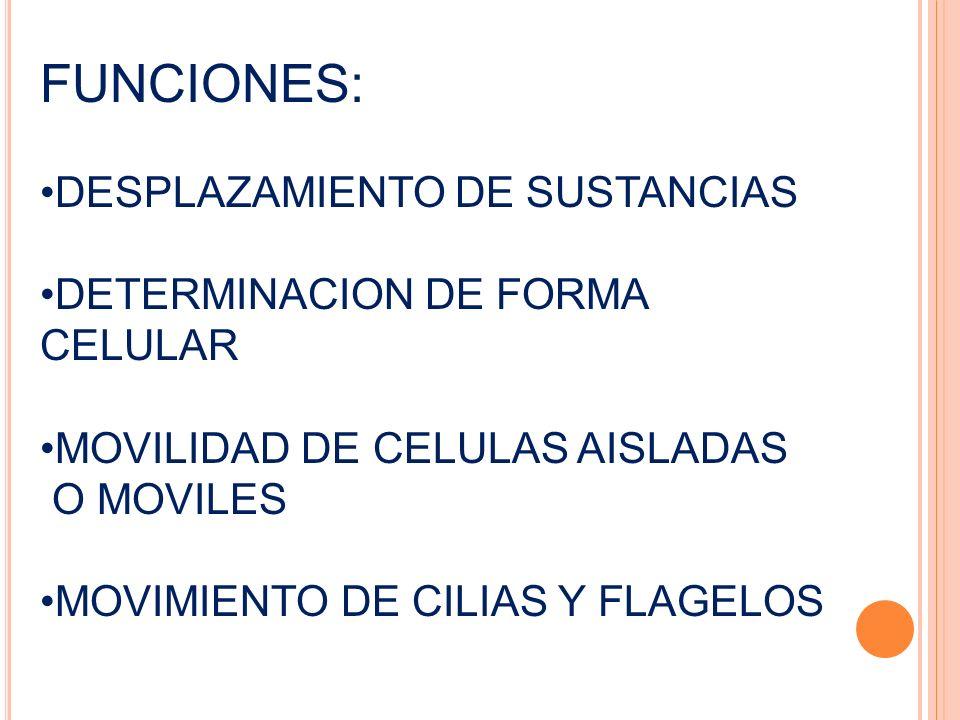 FUNCIONES: DESPLAZAMIENTO DE SUSTANCIAS DETERMINACION DE FORMA CELULAR MOVILIDAD DE CELULAS AISLADAS O MOVILES MOVIMIENTO DE CILIAS Y FLAGELOS