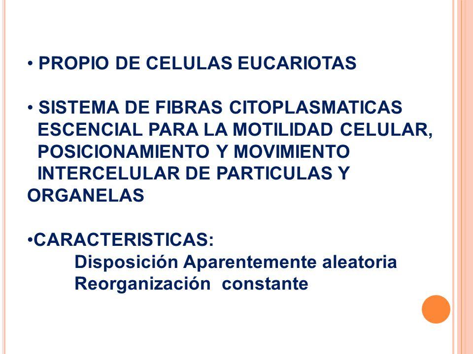 PROPIO DE CELULAS EUCARIOTAS SISTEMA DE FIBRAS CITOPLASMATICAS ESCENCIAL PARA LA MOTILIDAD CELULAR, POSICIONAMIENTO Y MOVIMIENTO INTERCELULAR DE PARTI