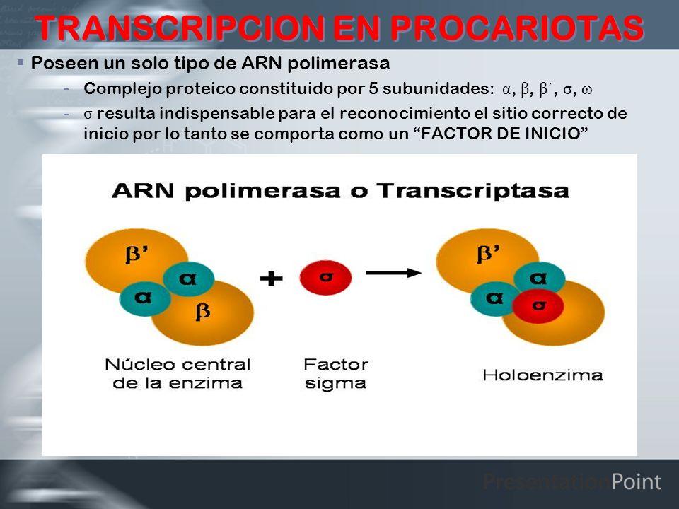 TRANSCRIPCION EN PROCARIOTAS Poseen un solo tipo de ARN polimerasa -Complejo proteico constituido por 5 subunidades: α, β, β ´, σ, ω -σ resulta indisp