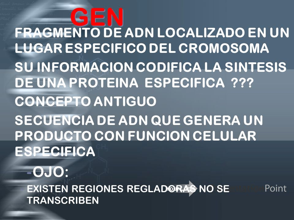 Your Logo GEN FRAGMENTO DE ADN LOCALIZADO EN UN LUGAR ESPECIFICO DEL CROMOSOMA SU INFORMACION CODIFICA LA SINTESIS DE UNA PROTEINA ESPECIFICA ??? CONC