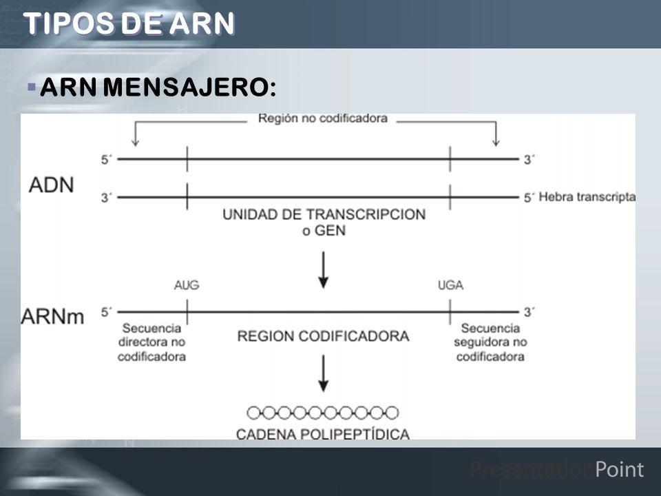TIPOS DE ARN ARN MENSAJERO: