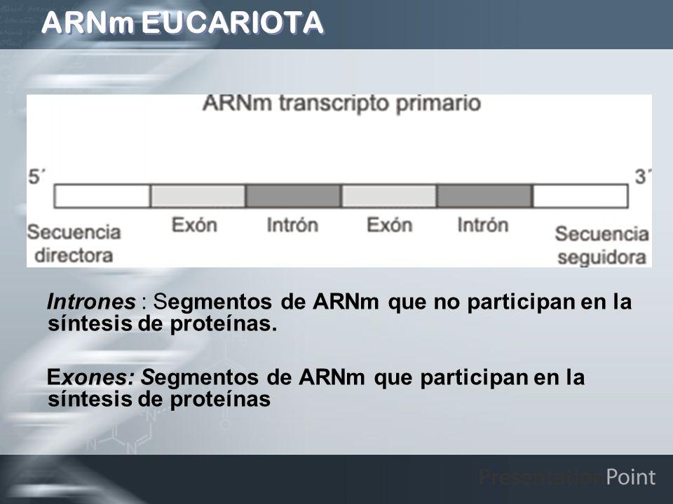 ARNm EUCARIOTA Intrones Intrones : Segmentos de ARNm que no participan en la síntesis de proteínas. xones: S Exones: Segmentos de ARNm que participan