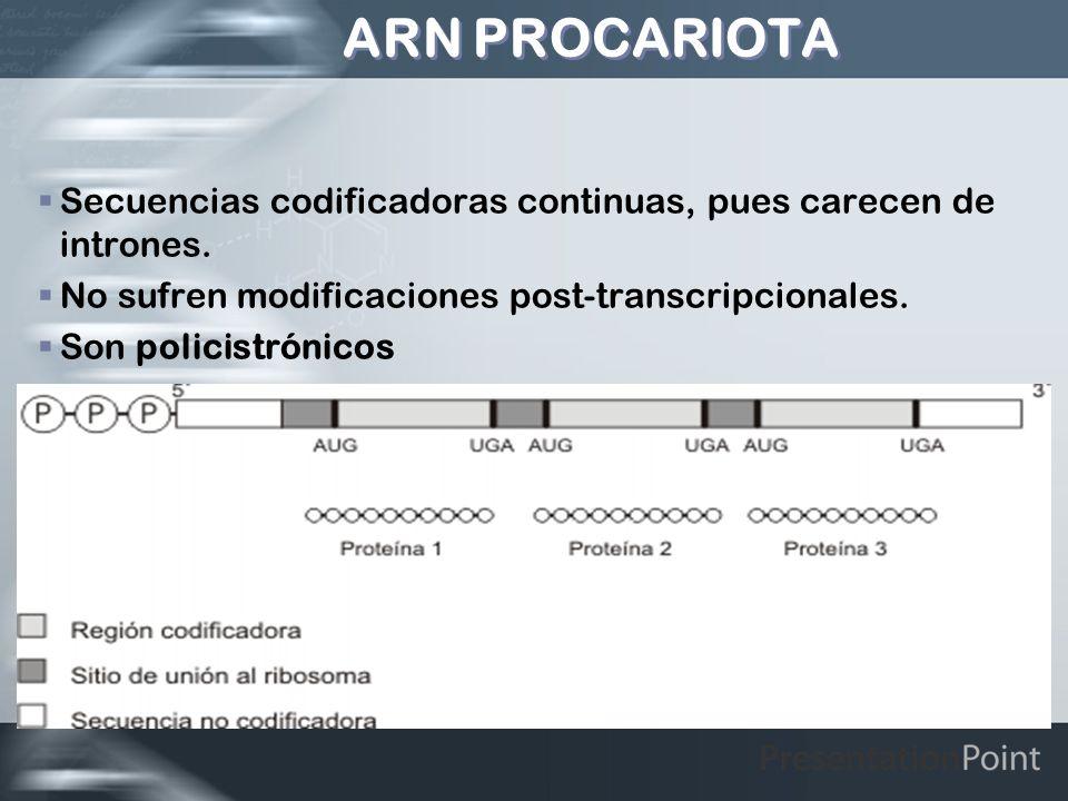 ARN PROCARIOTA Secuencias codificadoras continuas, pues carecen de intrones. No sufren modificaciones post-transcripcionales. Son policistrónicos