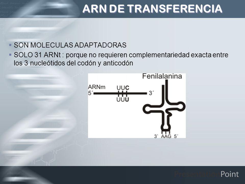 ARN DE TRANSFERENCIA SON MOLECULAS ADAPTADORAS SOLO 31 ARNt : porque no requieren complementariedad exacta entre los 3 nucleótidos del codón y anticod