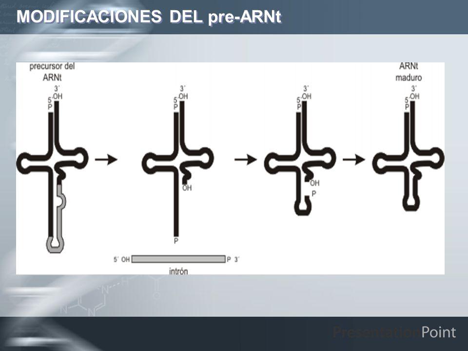 MODIFICACIONES DEL pre-ARNt