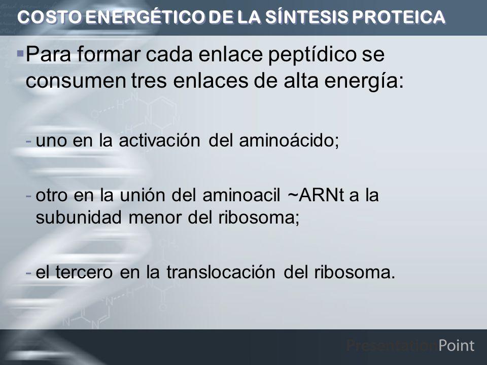COSTO ENERGÉTICO DE LA SÍNTESIS PROTEICA Para formar cada enlace peptídico se consumen tres enlaces de alta energía: -uno en la activación del aminoác