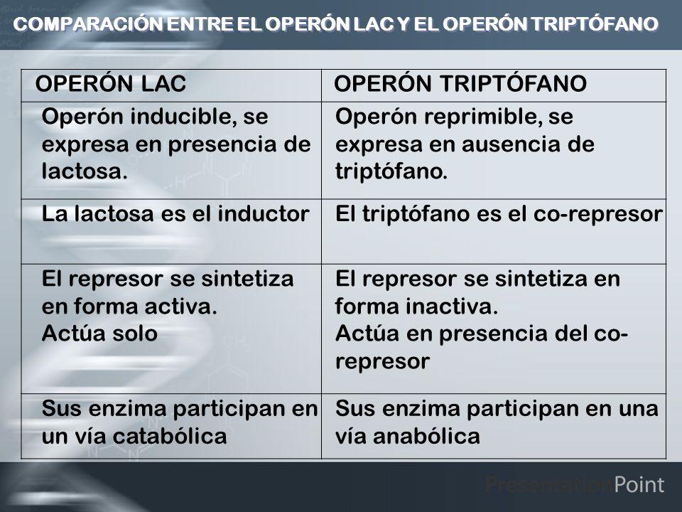 COMPARACIÓN ENTRE EL OPERÓN LAC Y EL OPERÓN TRIPTÓFANO OPERÓN LAC OPERÓN TRIPTÓFANO Operón inducible, se expresa en presencia de lactosa. Operón repri