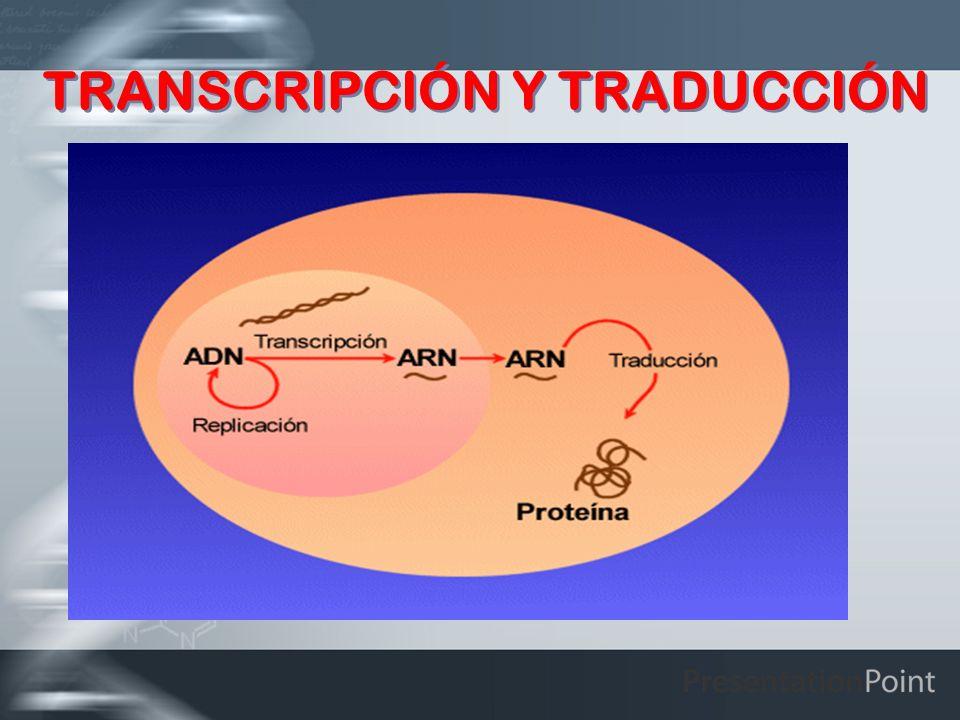 PROCESO GENERAL DE TRASCRIPCION Elementos Intervinientes: -ADN -ARN polimerasa ADN dependiente -Gen Promotor -Punto de inicio -Burbuja de transcripción -Sustratos: UTP, ATP, GTP Y CTP -Una fuente de energía: los mismos sustratos -Una pirofosfatasa.