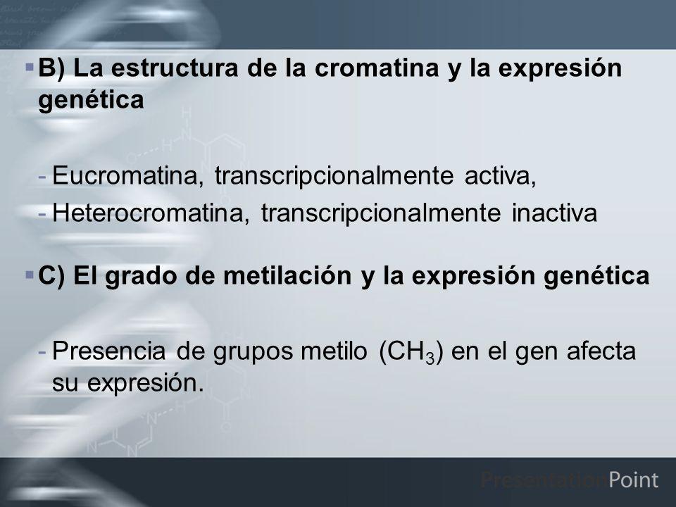 B) La estructura de la cromatina y la expresión genética -Eucromatina, transcripcionalmente activa, -Heterocromatina, transcripcionalmente inactiva C)