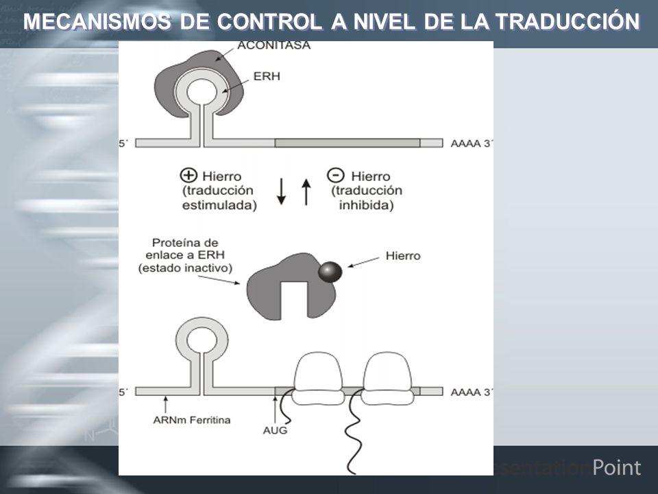 MECANISMOS DE CONTROL A NIVEL DE LA TRADUCCIÓN