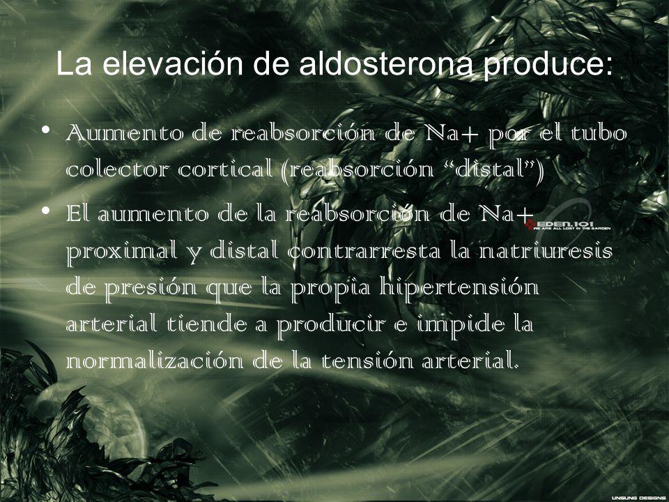 La elevación de aldosterona produce: Aumento de reabsorción de Na+ por el tubo colector cortical (reabsorción distal) El aumento de la reabsorción de
