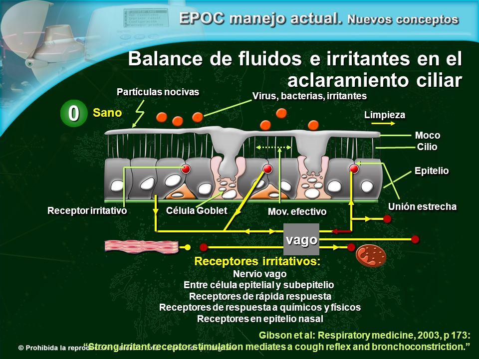 Receptores irritativos: Nervio vago Entre célula epitelial y subepitelio Receptores de rápida respuesta Receptores de respuesta a químicos y físicos R