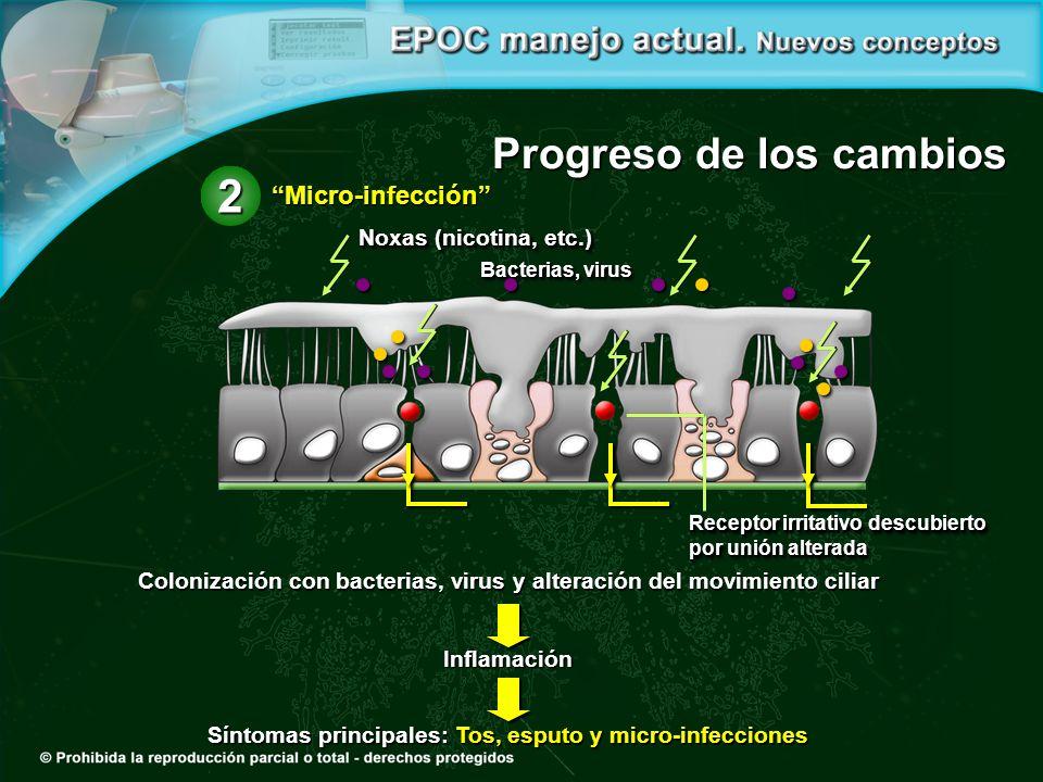 Colonización con bacterias, virus y alteración del movimiento ciliar Inflamación Síntomas principales: Tos, esputo y micro-infecciones Progreso de los
