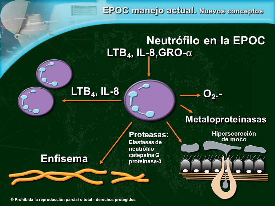 O 2.- LTB 4, IL-8,GRO- LTB 4, IL-8,GRO- MetaloproteinasasMetaloproteinasas LTB 4, IL-8 EnfisemaEnfisema Proteasas: Elastasas de neutrófilo catepsina G proteinasa-3 Hipersecreción de moco Neutrófilo en la EPOC