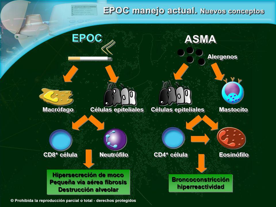 Macrófago Células epiteliales MastocitoMastocito Hipersecreción de moco Pequeña vía aérea fibrosis Destrucción alveolar Hipersecreción de moco Pequeña vía aérea fibrosis Destrucción alveolar Broncoconstricción hiperreactividad hiperreactividad Eosinófilo CD4 + célula CD8 + célula Neutrófilo ASMAASMAAlergenosAlergenos EPOCEPOC
