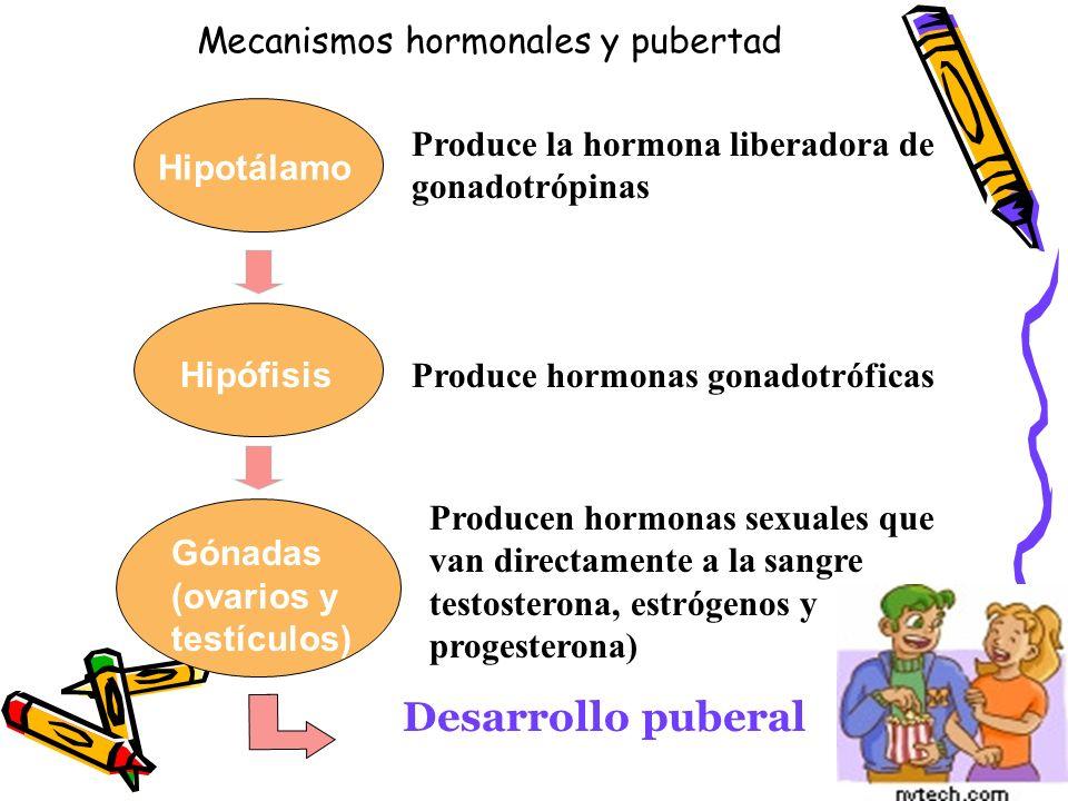 INFLUENCIAS HORMONALES TestosteronaDeseo Sexual Irritabilidad y agresividad Dominancia EstrógenosInestabilidad emocional Síntomas depresivos ProgesteronaCreación vínculos afectivos Cambios físicos, cambios en patrones de sueño