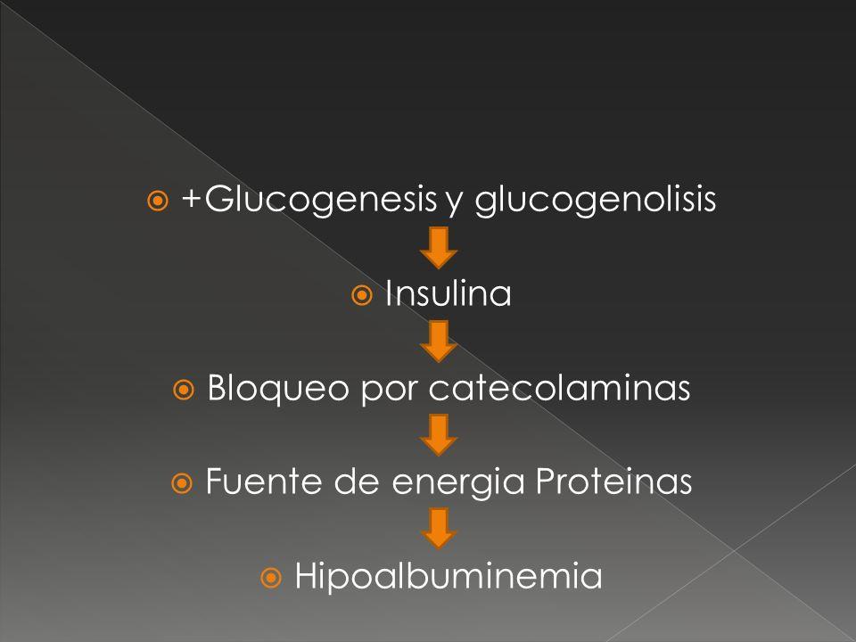 +Glucogenesis y glucogenolisis Insulina Bloqueo por catecolaminas Fuente de energia Proteinas Hipoalbuminemia
