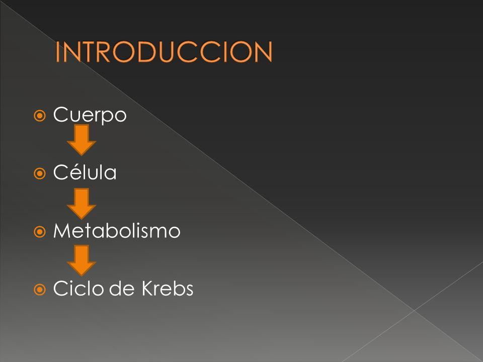 Cuerpo Célula Metabolismo Ciclo de Krebs
