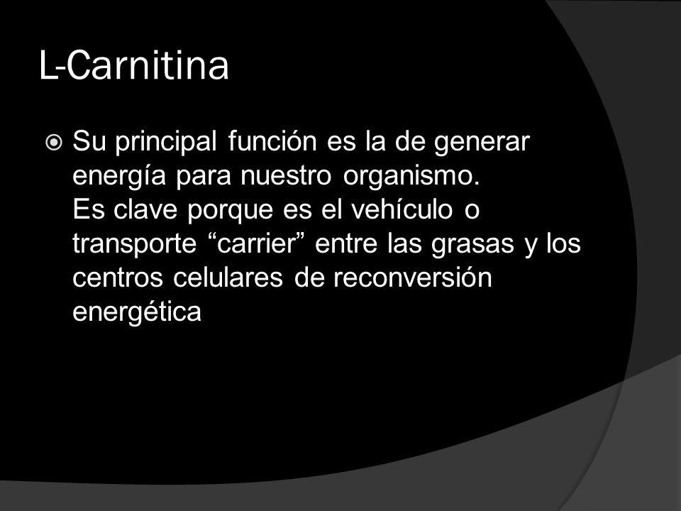 L-Carnitina Su principal función es la de generar energía para nuestro organismo. Es clave porque es el vehículo o transporte carrier entre las grasas