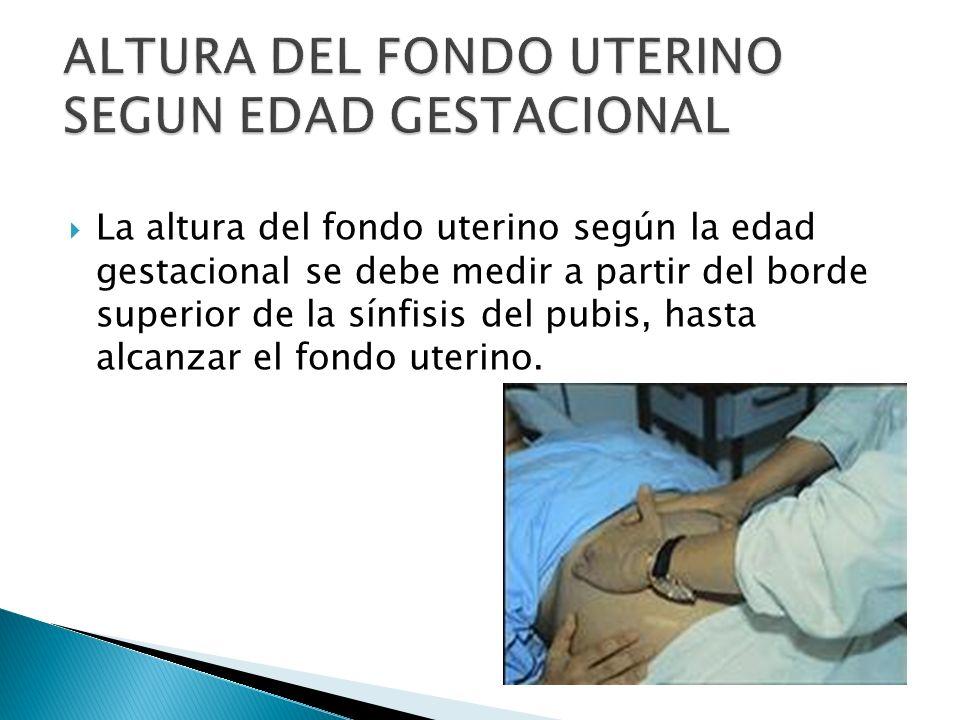 La altura del fondo uterino según la edad gestacional se debe medir a partir del borde superior de la sínfisis del pubis, hasta alcanzar el fondo uter