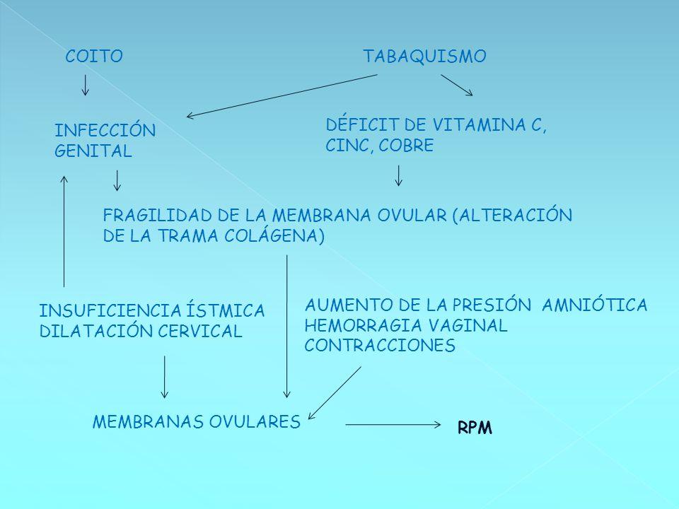 COITOTABAQUISMO INFECCIÓN GENITAL DÉFICIT DE VITAMINA C, CINC, COBRE FRAGILIDAD DE LA MEMBRANA OVULAR (ALTERACIÓN DE LA TRAMA COLÁGENA) INSUFICIENCIA