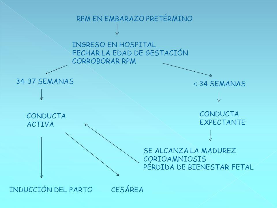 RPM EN EMBARAZO PRETÉRMINO INGRESO EN HOSPITAL FECHAR LA EDAD DE GESTACIÓN CORROBORAR RPM 34-37 SEMANAS 34 SEMANAS CONDUCTA ACTIVA CONDUCTA EXPECTANTE