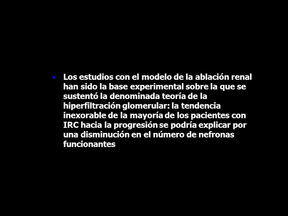 Los estudios con el modelo de la ablación renal han sido la base experimental sobre la que se sustentó la denominada teoría de la hiperfiltración glom