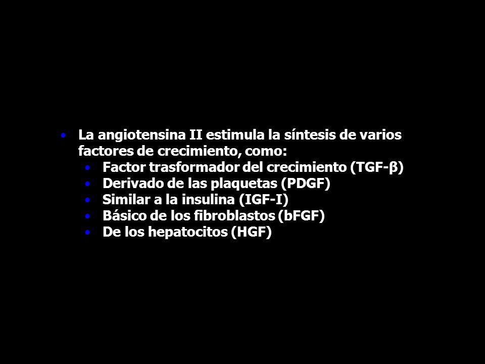 La angiotensina II estimula la síntesis de varios factores de crecimiento, como: Factor trasformador del crecimiento (TGF-β) Derivado de las plaquetas