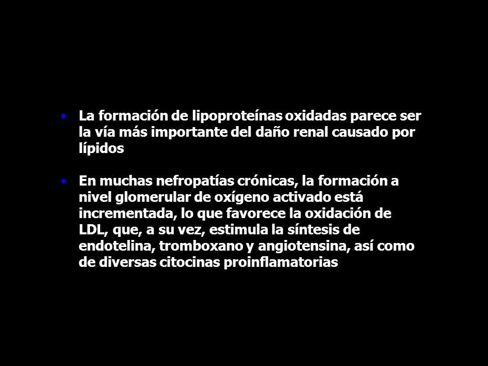 La formación de lipoproteínas oxidadas parece ser la vía más importante del daño renal causado por lípidos En muchas nefropatías crónicas, la formació