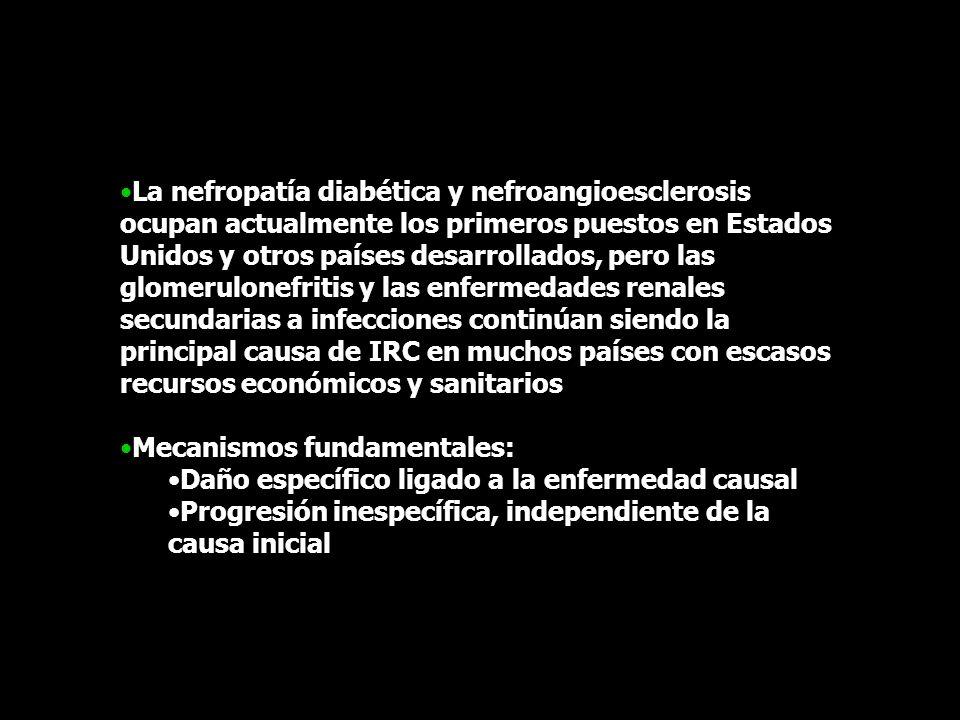 La nefropatía diabética y nefroangioesclerosis ocupan actualmente los primeros puestos en Estados Unidos y otros países desarrollados, pero las glomer