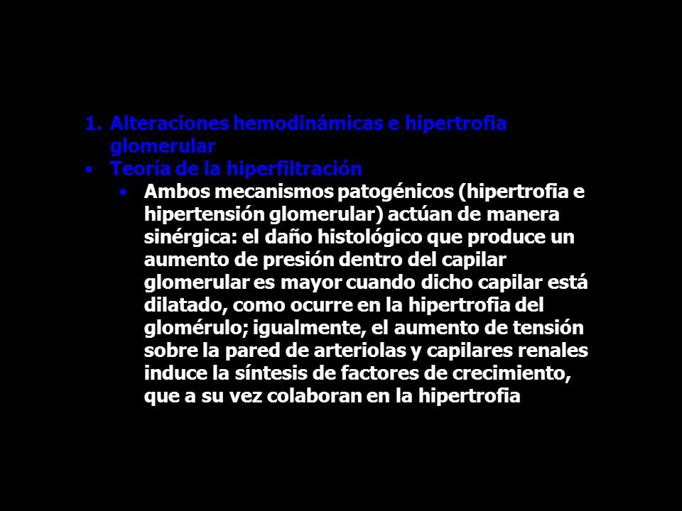 1.Alteraciones hemodinámicas e hipertrofia glomerular Teoría de la hiperfiltración Ambos mecanismos patogénicos (hipertrofia e hipertensión glomerular