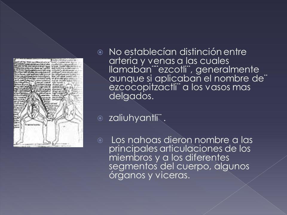 No establecían distinción entre arteria y venas a las cuales llamaban¨¨ezcotli¨, generalmente aunque si aplicaban el nombre de¨ ezcocopitzactli¨ a los