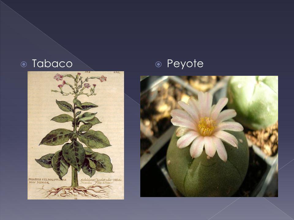 Tabaco Peyote