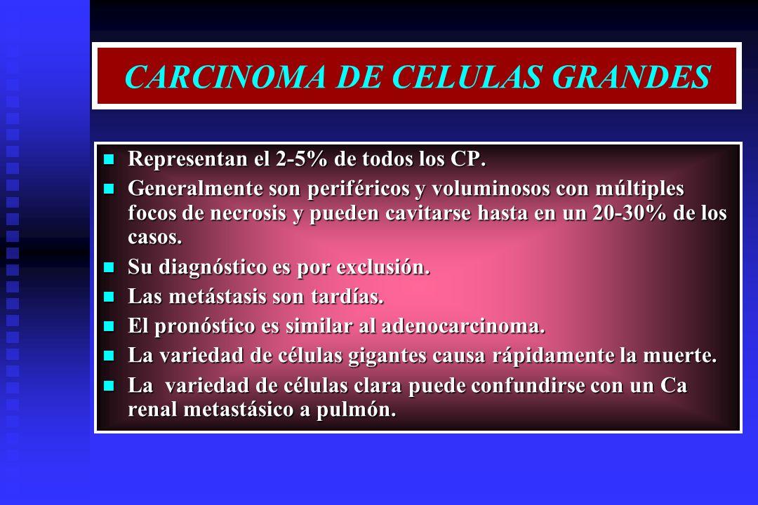 CARCINOMA DE CELULAS GRANDES Representan el 2-5% de todos los CP. Representan el 2-5% de todos los CP. Generalmente son periféricos y voluminosos con