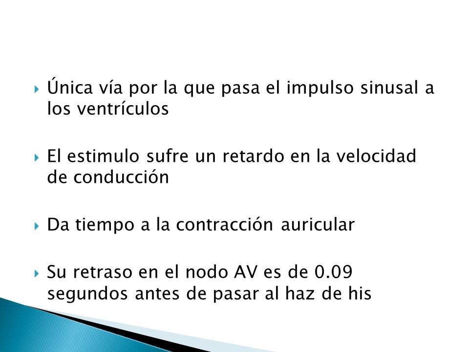 Única vía por la que pasa el impulso sinusal a los ventrículos El estimulo sufre un retardo en la velocidad de conducción Da tiempo a la contracción a